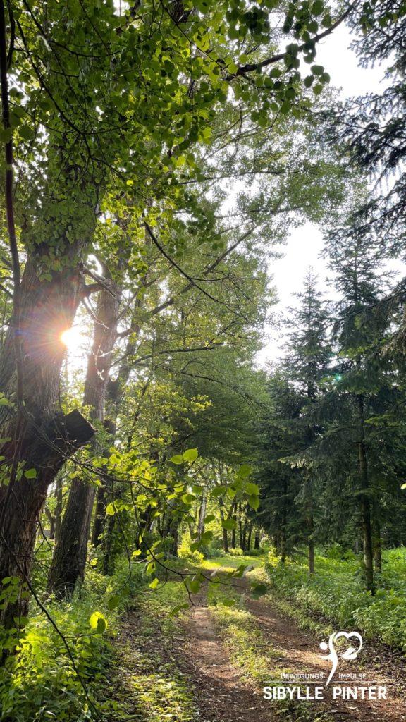 Alphalauf im Wald